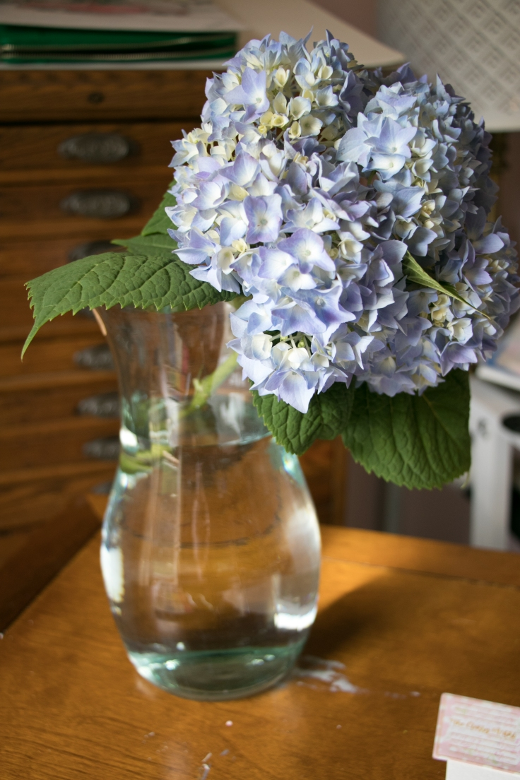 hydrangea painting reference.jpg